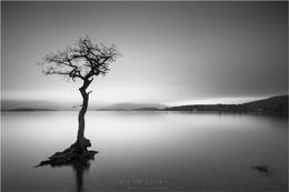 Milarrochy Bay Lone Tree