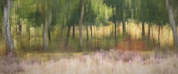 Sherwood Heathland by Fernowl
