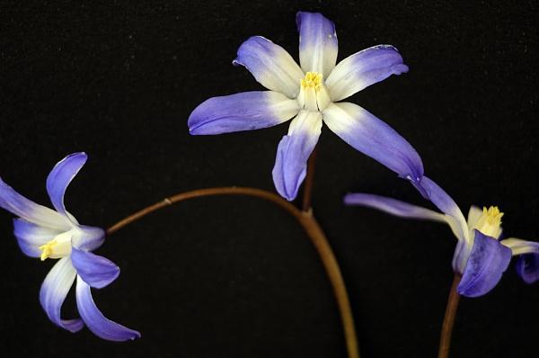 little flowers by rocky41