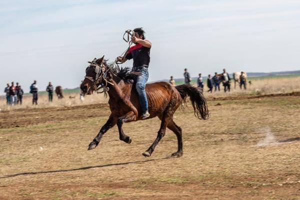 Horseman by rninov