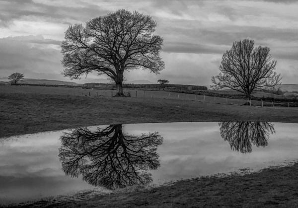 Tree Reflections by BillRookery