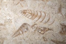 Photo : Kitchen floor fossils