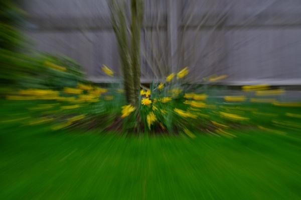 Bursting into Spring by Aveeno
