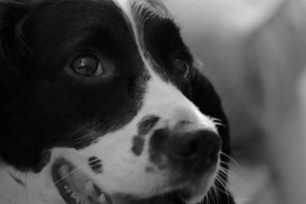 Maisie by BertM