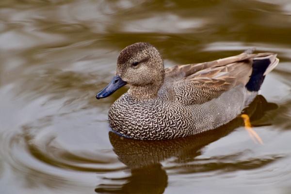 Duck world by BertM