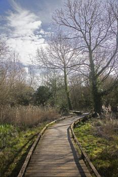Boardwalk to the first hide at the Haven