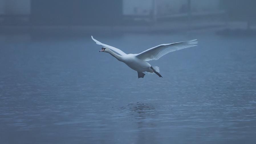 Foggy Landing