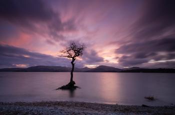 Millarochy Tree