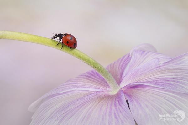 Ladybird bridge by Angi_Wallace