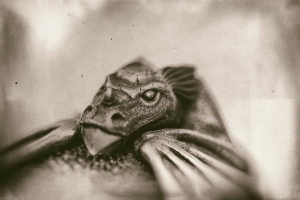 Dragon Emerging by Merlin_k