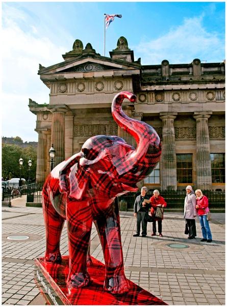 Tartan Elephant by mac