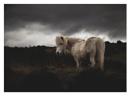 Moor Horse by PictureDevon