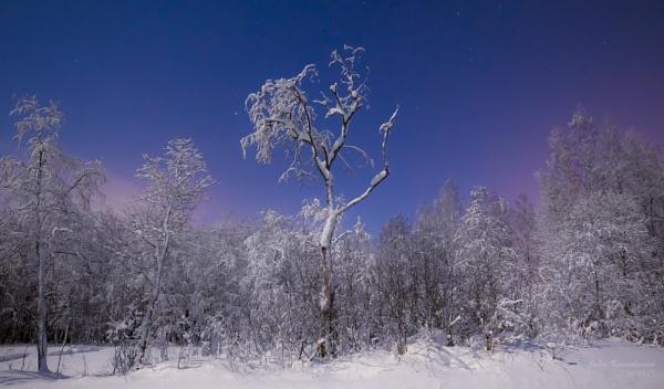 Frozen by jupokoo