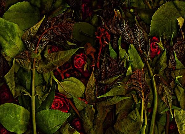 secret garden by mtuyb