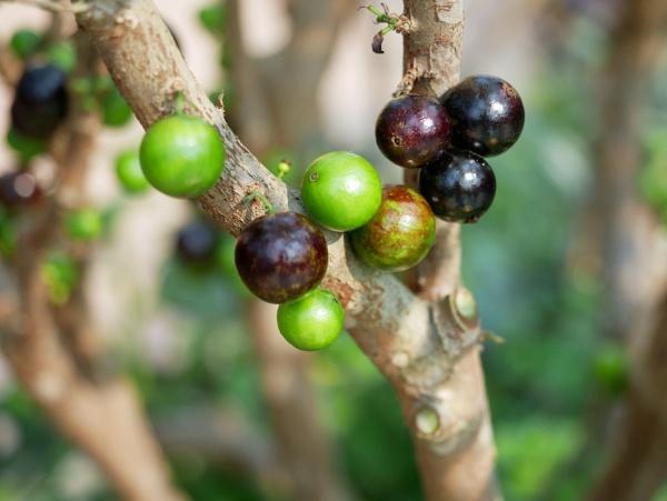 Figs by RoderickTsang