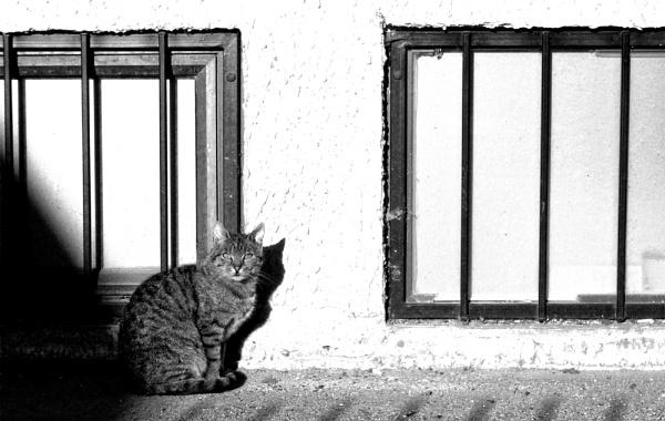 Shadows of Morning XLIX by MileJanjic