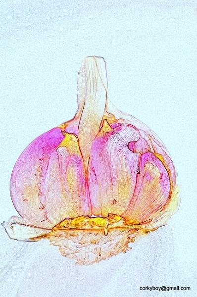 Garlic. by rustyshackleford
