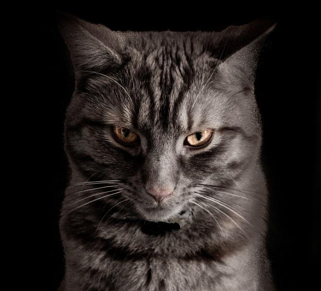 Intense Cat !