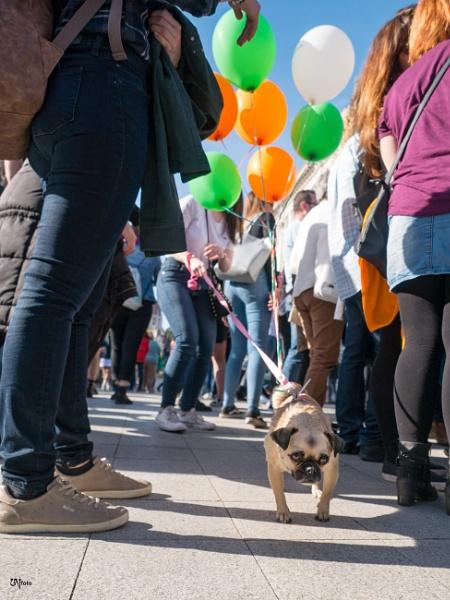 Saint Patrick\'s Dog by un2112