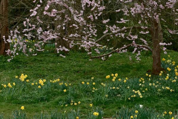 Springtime by JJGEE