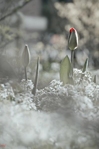 Springtime, almost... by HarmanNielsen