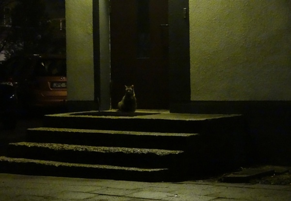 Night yard without a cat? Never! by SauliusR