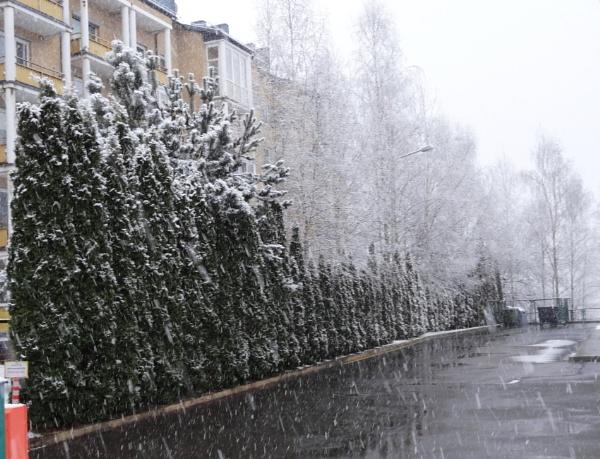 Snow again by SauliusR