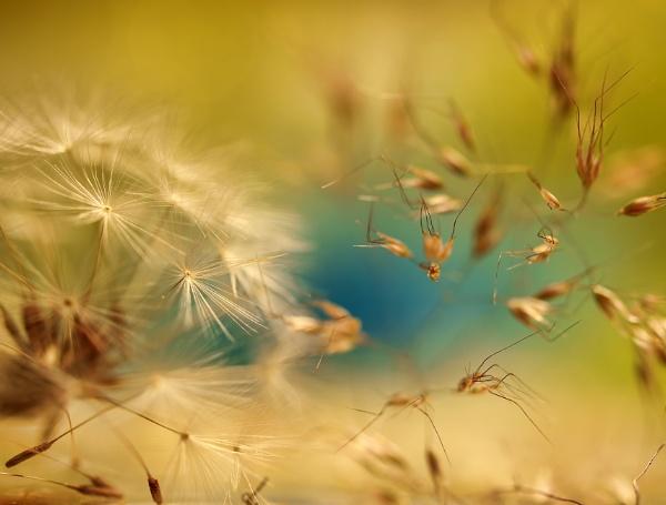 Wind catchers by littleflea