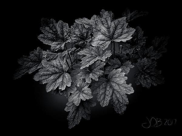 Leaves by Big_Beavis