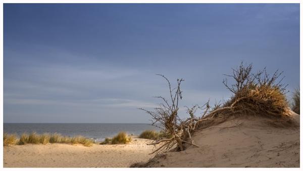 Dead Wood Dune by JelFish
