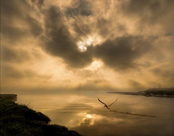 Dawns Heartbeat by adriansart