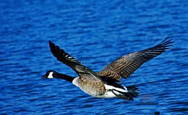 Taking Flight by Eich