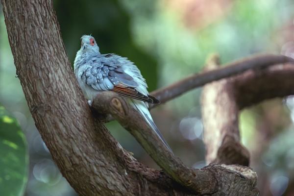 Diamond Dove by DBoardman