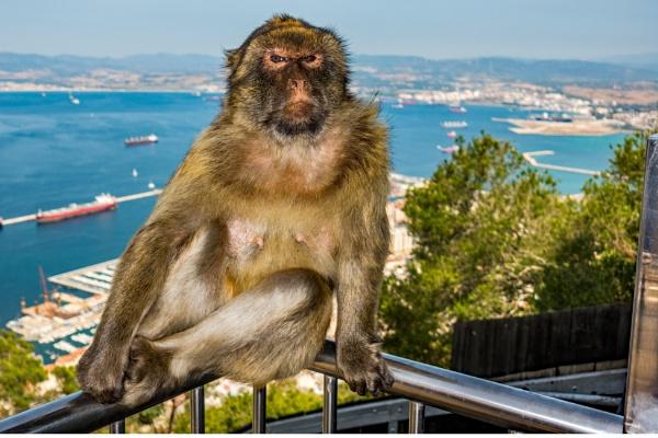 Posing ape by terra