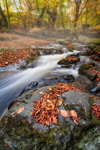 Autumn Mist by douglasR