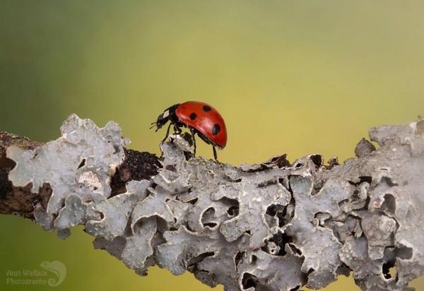 Ladybird walk by Angi_Wallace