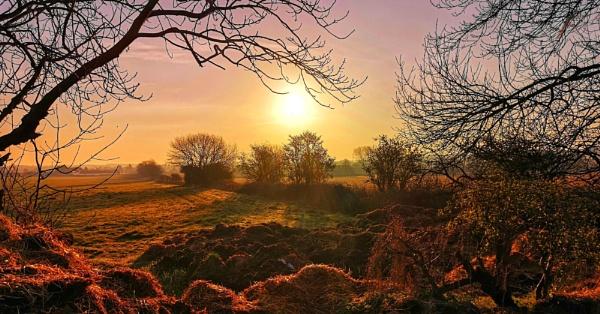 Morning Glory by neilfuller