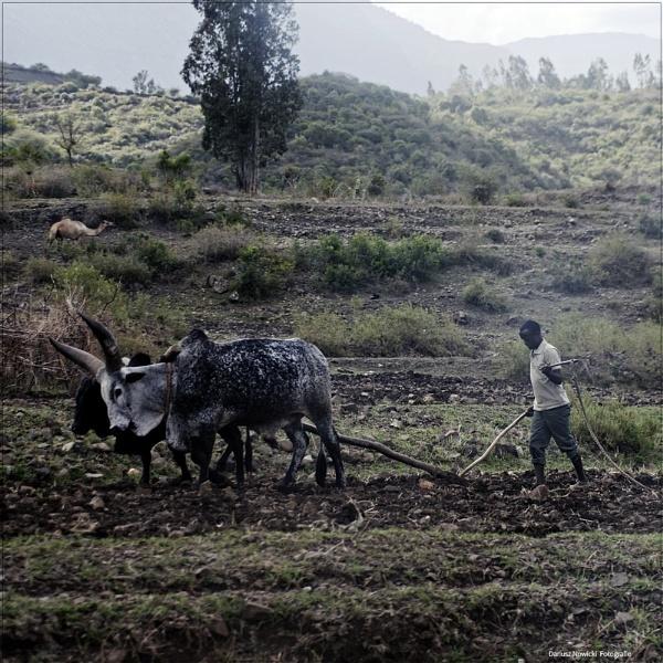 on fields . Ethiopia by papajedi
