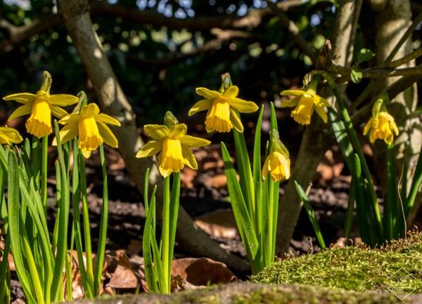 Hint Of Spring by Jodyw17