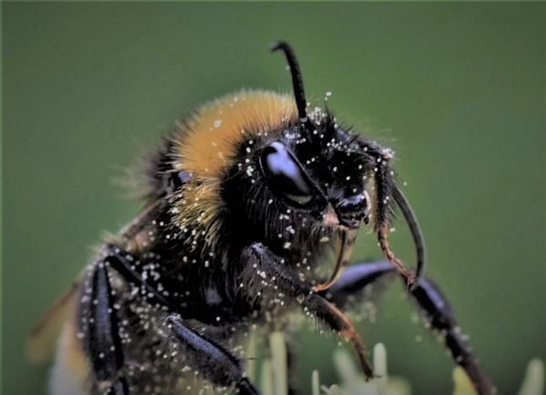 A Few Speck`s Of Pollen. by macromal