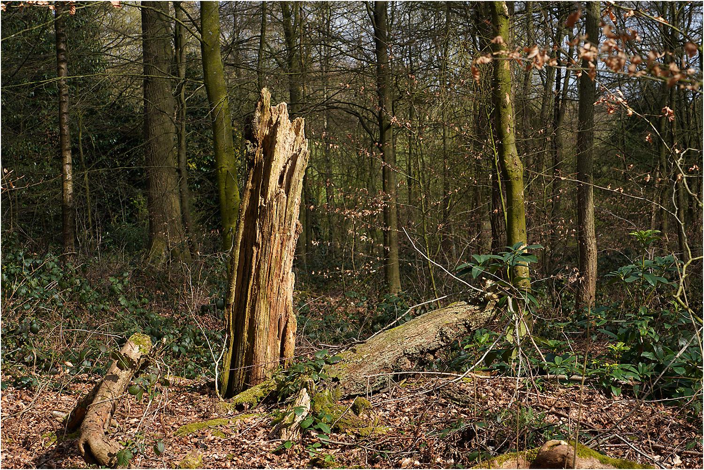 Haigh Woodland
