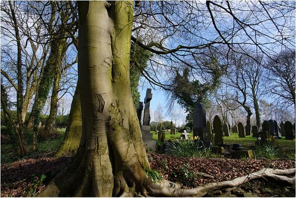 Woodland Graveyard by johnriley1uk