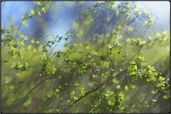 aprilsprouts (1) by FabioKeiner