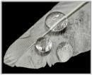 Feather by EddieAC