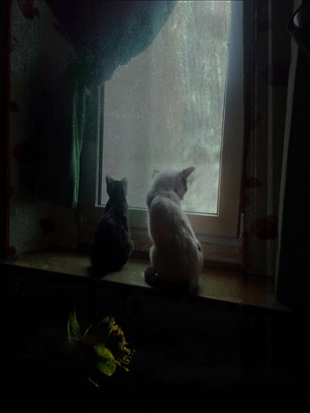 cat sanctuary by lostrita