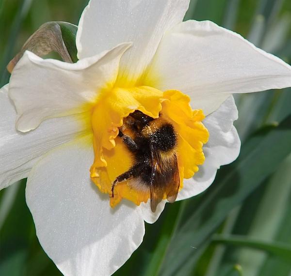 Busy Bee by Backabit