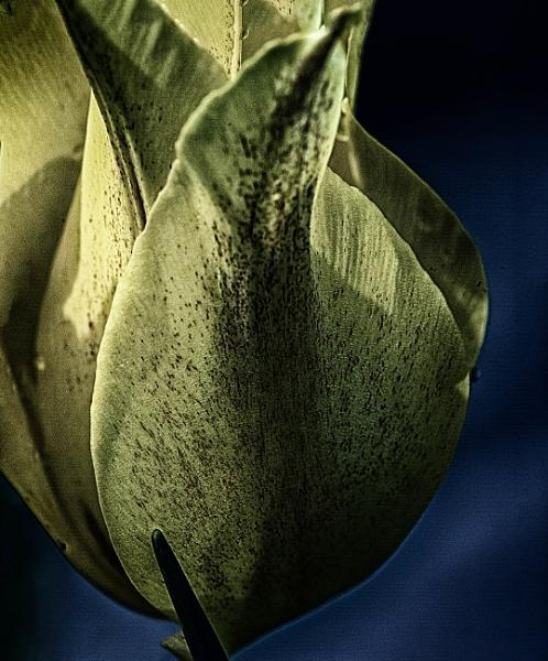 a little close up hdr by bornstupix2
