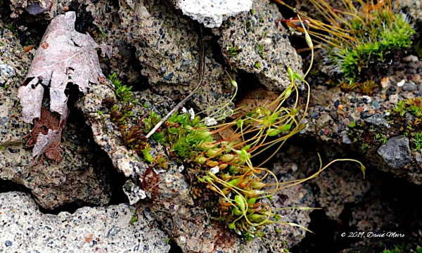 Moss on The Rocks by youcantoo