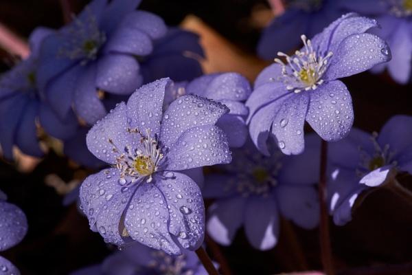 Spring Flowers I by LotaLota