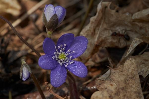 Spring Flowers II by LotaLota